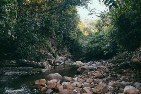 Ayahuasca Center- Jungle River