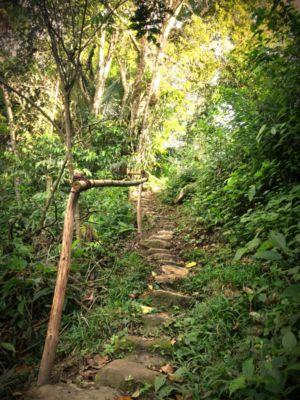 Ayahuasca Center- Magic pathways